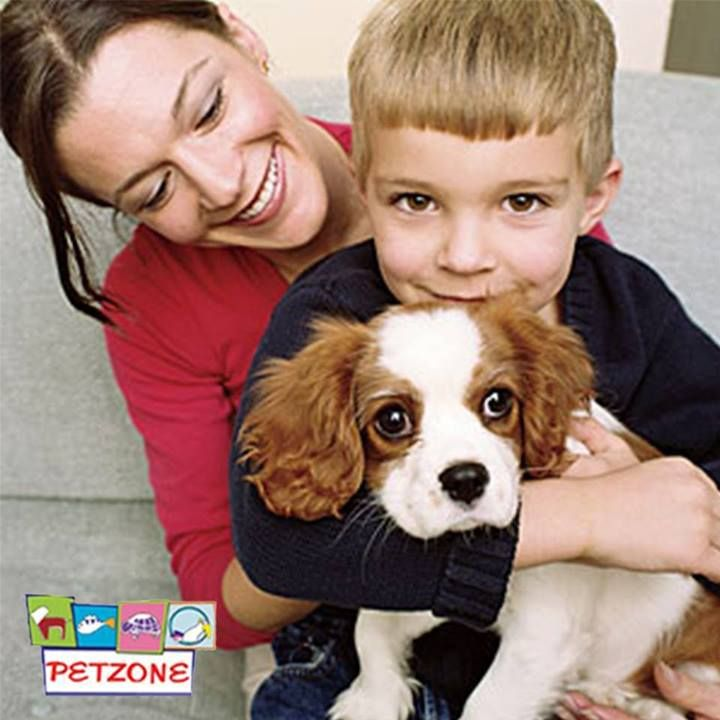 """#Petzone #Dubai #DogLovers #PetTips  """"BE CONSISTENT""""  Whenever you're training your dog, it's important to get as many family members involved as possible so everyone's on the same page. If you are telling your dog """"off"""" when he jumps on the couch and someone else is saying """"down,"""" while someone else is letting him hang out up there, how on earth is he ever going to learn what you want? Consistency will be the key to your success."""