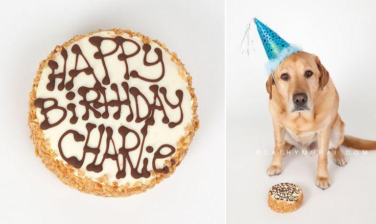 Dog Birthday Cakes San Antonio Tx