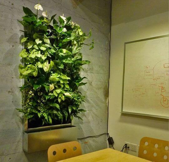 plantsonwalls