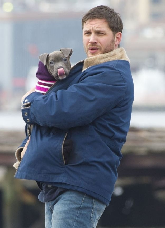 Tom Hardy And A Puppy (In A Sweater!)  *Should have a WARNING:  Your Ovaries Will Explode sticker on it.*