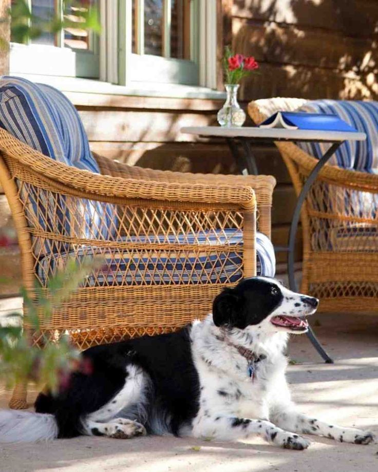 12 Amazing Pet-Friendly Hotels in the U.S. | Martha Stewart Weddings
