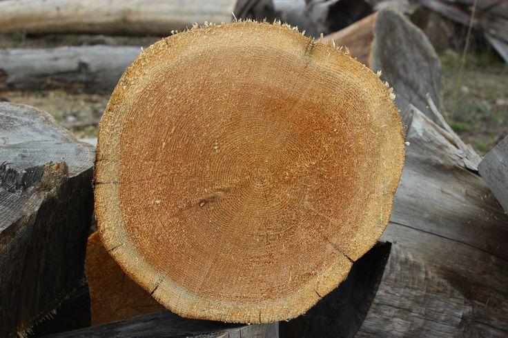 Northern White Cedar Heartwood