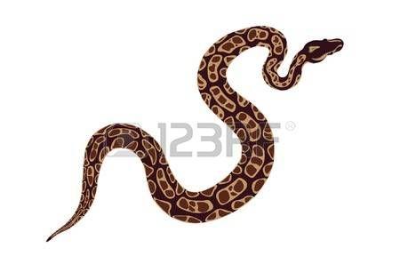 뱀 photo