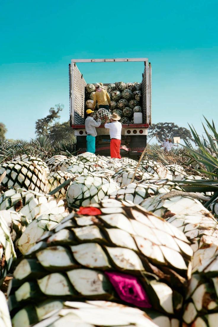 la imagen del día. #TequilaOmega