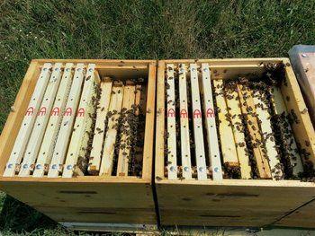 Iti explic 6 metode utile prin care sa produci 3 ori mai multa miere, prin pasi simpli si usor de urmat. Intra acum sa descoperi si tu.