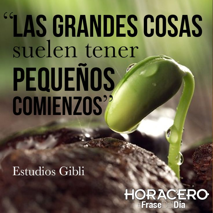 Best 121 hora cero frases images on pinterest quote of for Estudios pequenos