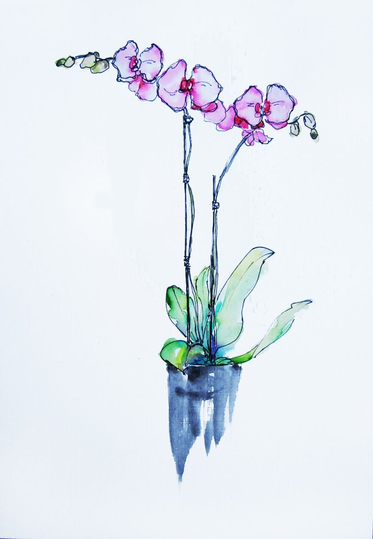 Pink Orchid watercolor and ink pen painting by OldPenArtStudio on Etsy