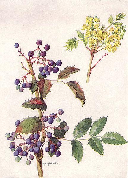 59 best herb botanical prints and illustrations for Oregon craft floral