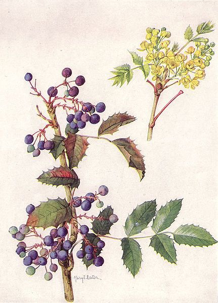 59 best images about herb botanical prints and for Oregon craft floral