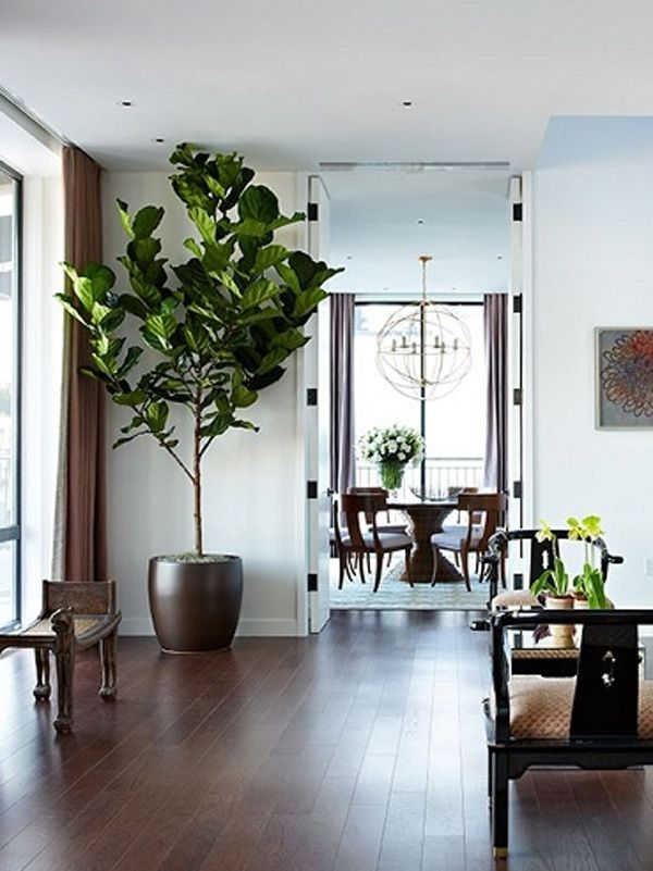 Fiddle Leaf Fig Tree.....need this! More