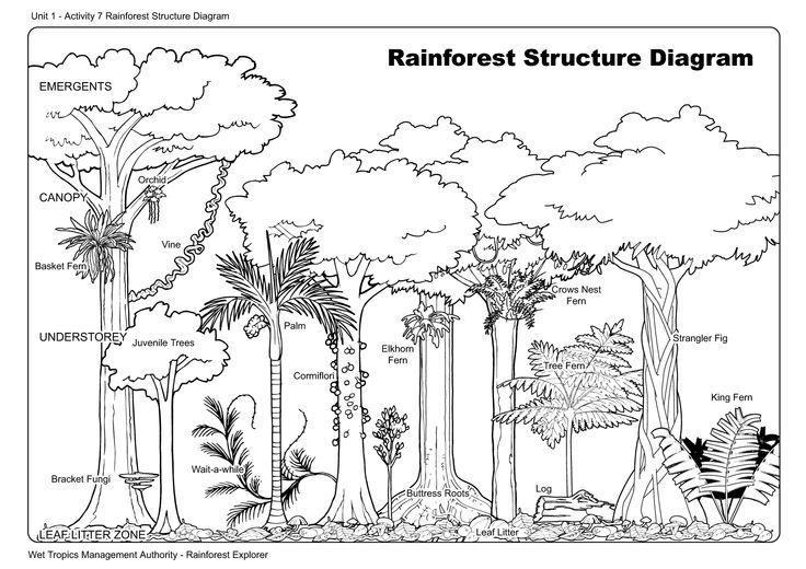 17 best images about rainforest animals on pinterest vocabulary worksheets rainforest animals. Black Bedroom Furniture Sets. Home Design Ideas