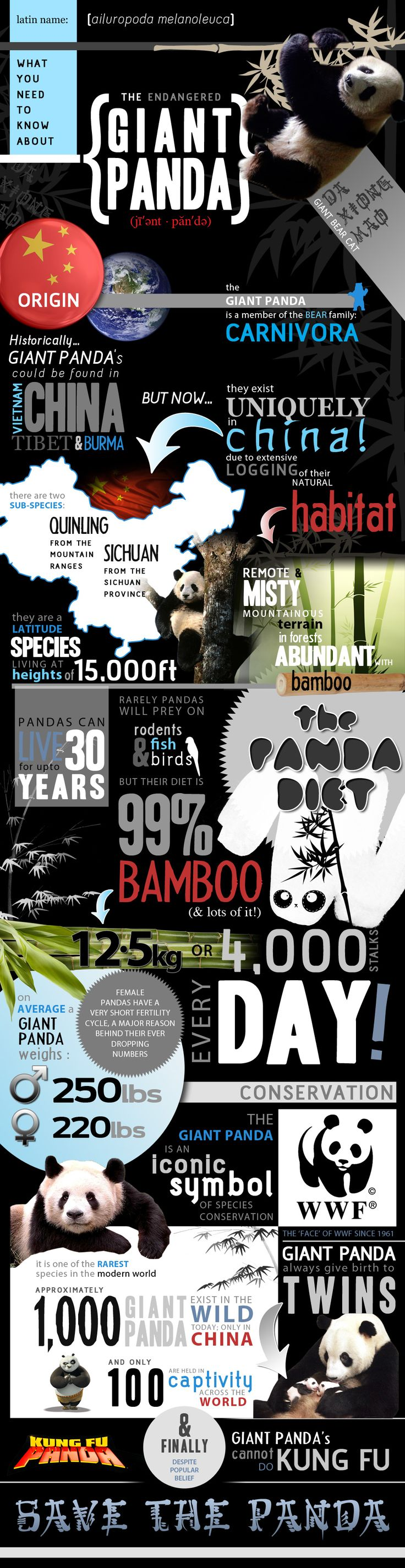 One of the most endangered animals in the world, the Giant Panda, needs protecting. We have made an infographic with all the facts and figures you nee
