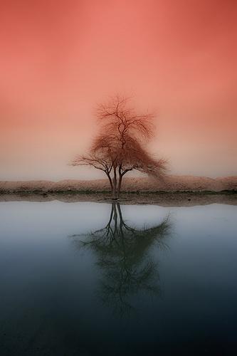 ✯ Tree Alone