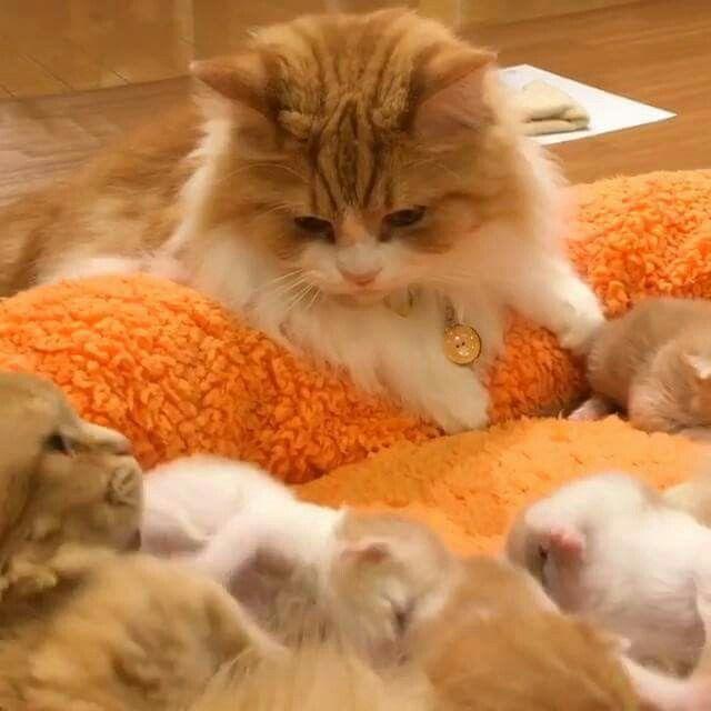 Гифки с котятами смешные анимированные, подготовительной группе звонок
