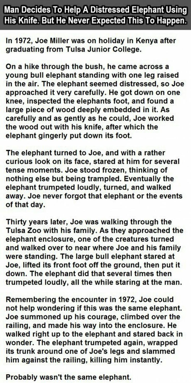 best 25+ funny elephant ideas on pinterest | elephant world