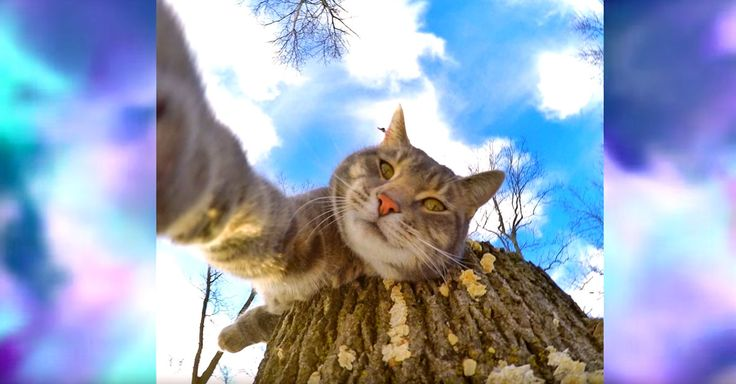Meet A Cat Who Takes Selfies Better Than You Do - normally I roll me eyes at selfies, but this is 2 cool!