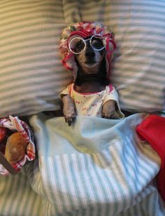 Big Bad Wolf Grandma Dog Costume