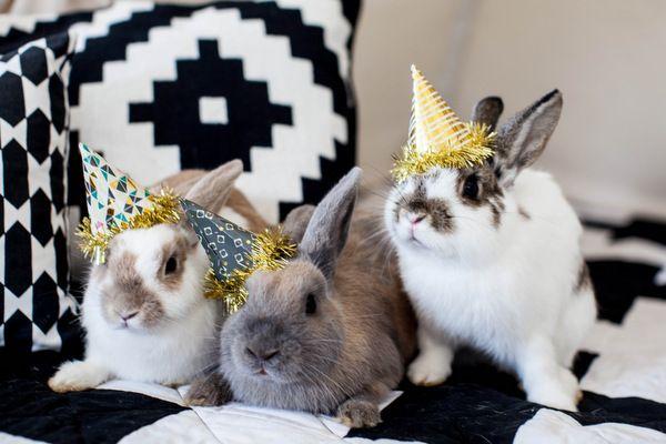 Fêtes des lapins et chapeau à leur maître