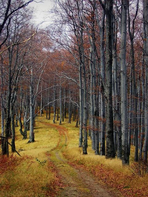 Út a vadonban / Path in the wilderness (Börzsöny Mountains), Hungary