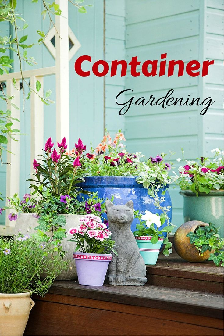 Try out container gardening with quick to grow plants. It is an ideal choice to grow plants in limited space.