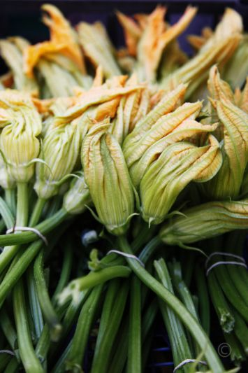 FLEURS de COURGETTE~ The flower of the zucchini plant. A popular dish in summer, when zucchini is plentiful. Prepared by dipping in a very light batter and deep frying (sigh!) they crackle in your mouth, or stuffed with a savory mixture and baked.