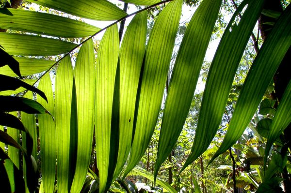 Колыбель майя. Экзотика Тихоокеанского побережья #Guatemala