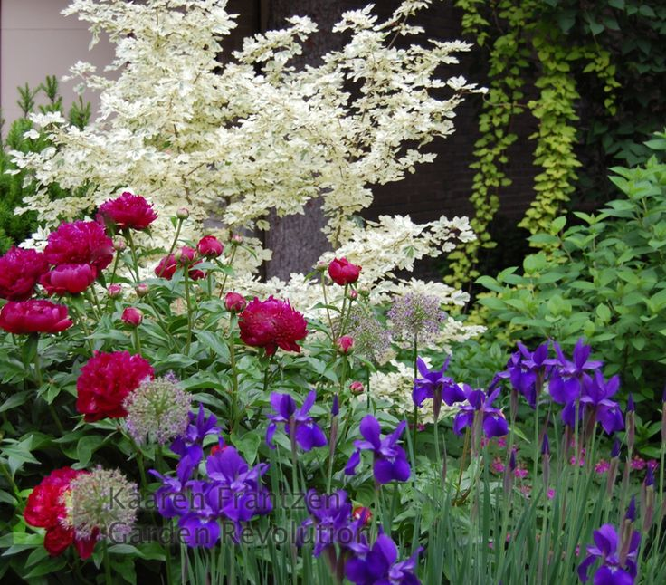 spring garishness perennial - Flower Garden Ideas Illinois