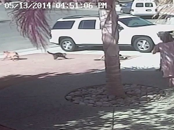 Greatest Cat Ever Saves Boy from Dog Attack (Video) http://www.people.com/people/pets/article/0,,20816684,00.html