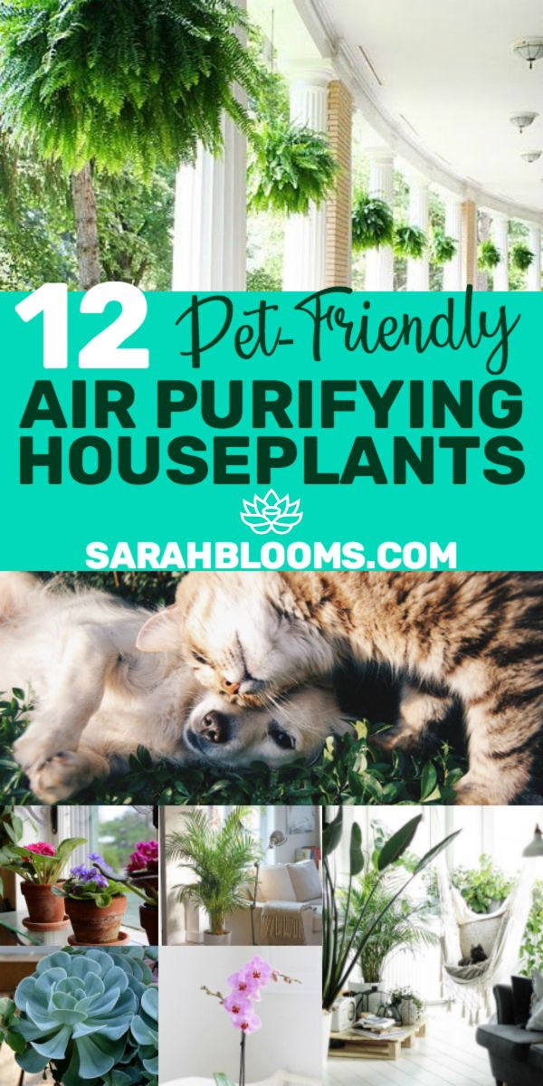 20 Air Purifying Houseplants Safe For Dogs Cats Sarah Blooms Dog Safe Plants Safe House Plants Plants