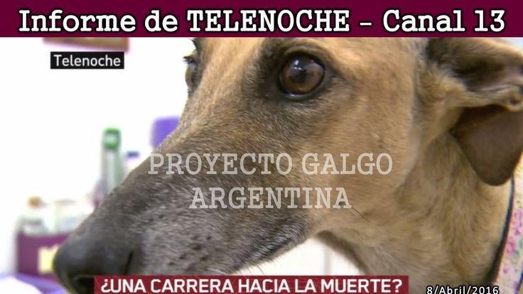 Ayudemos a firmar la petición para crear la Ley de prohibición de carreras de perros en toda Argentina. Los animales también son almas.