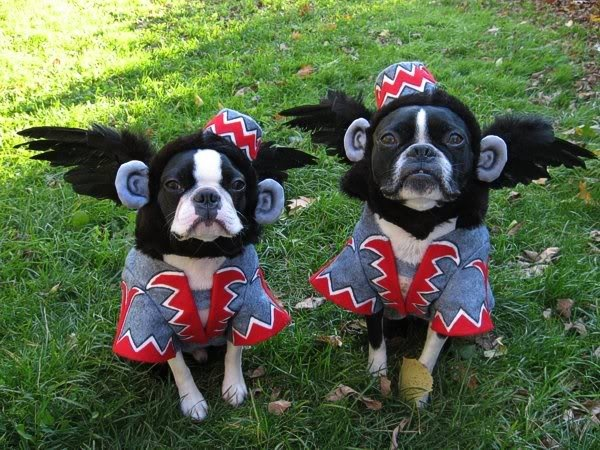Flying monkey homemade Halloween costumes. Precious! & The 900 best Pet Parade Time images on Pinterest | Funny animals ...