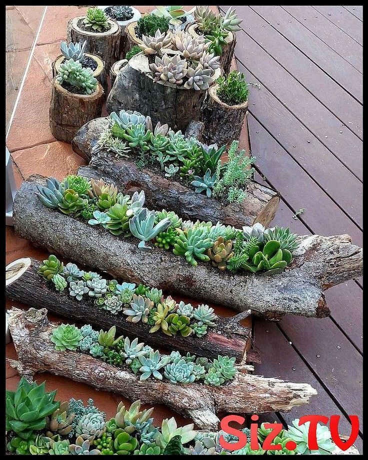 58 Atemberaubende Diy Succulents Garden Decor Ideas 58 Atemberaubende Diy Succulents Garden
