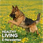 Dog Age Calculator -Healthy Living E-Newsletter >