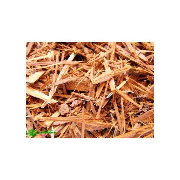 Catuaba (Erythroxylum catuaba) - Planta de excelência muito utilizada como afrodisíaco e energizante!
