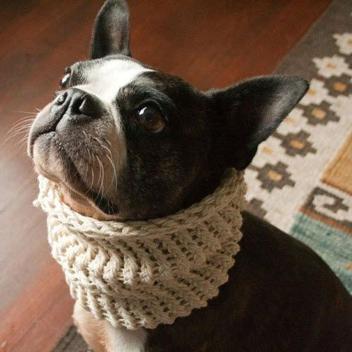 Think you might need to make this @Kelly TaylorNeck Warmers, French Bulldogs, Dogs House, Fishermans Knots, Pets, Scarves, Winter Solstice, Boston Terriers, Dogs Cowls