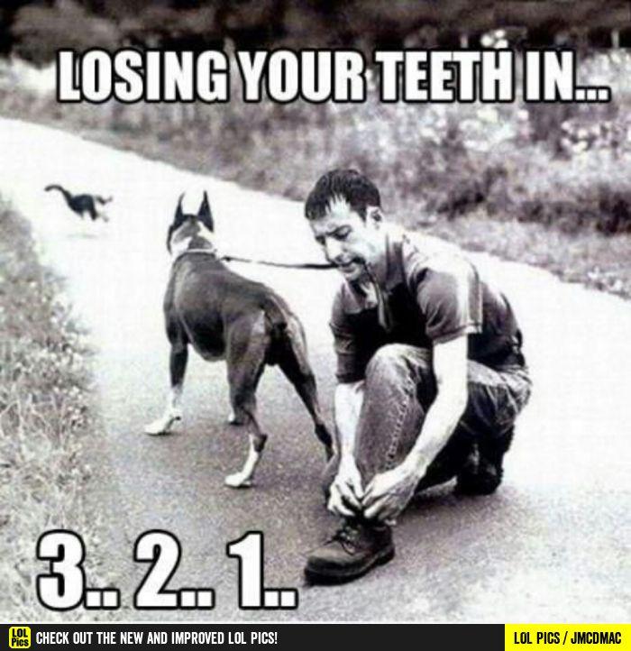 This image was shared via LOL Pics