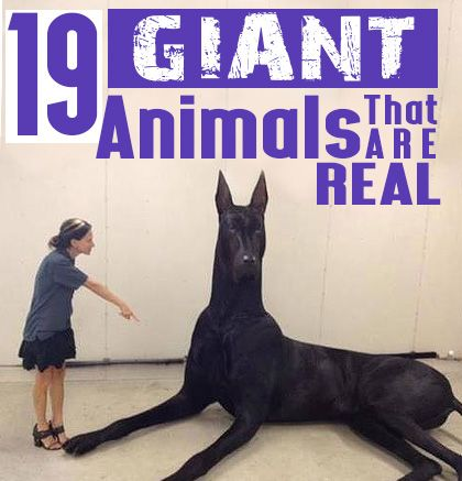 19 Giant Animals That Are Real