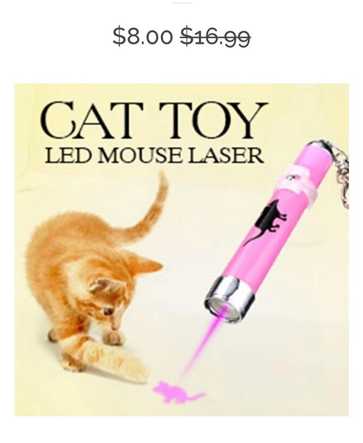 LASER POINTERS FOR CATS! ON SALE NOW WITH FREE SHIPPING!  #laser #laserpointer #cats #cat #cats_of_instagram #catsofinstagram #cutecat #animals #catlove #mypet #kittens #kitty #kitten #catoftheday #instakitty #meow #weeklyfluff #mainecoon #vet #veterinarian #vetlife #persian #burmese #americanshorthair #exoticshorthair #himalayancat #siamesecat #ragdoll