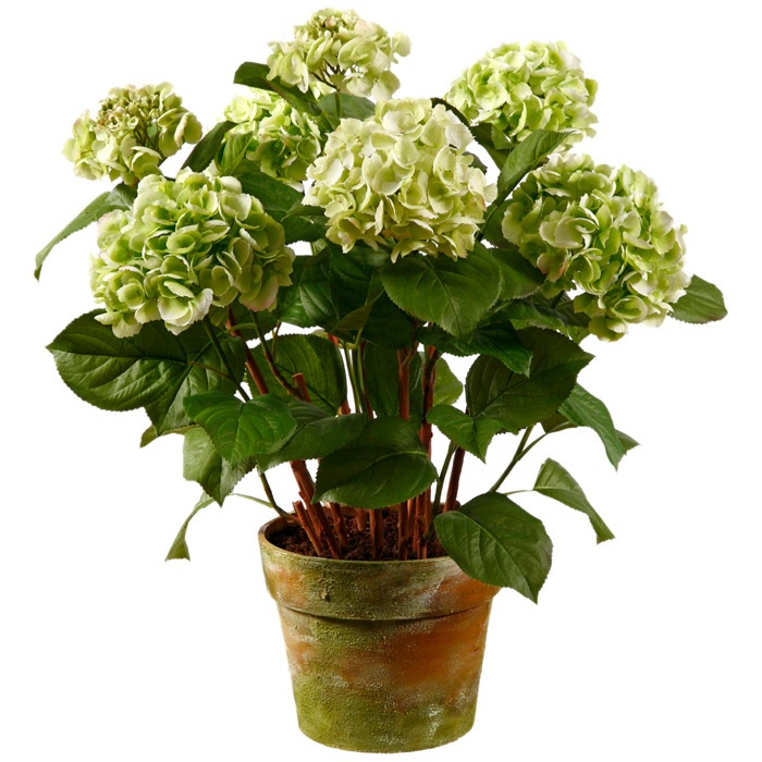 : Green Home, Faux Green, Floralsilk Flowers, Faux Pots, Green Hydrangeas, Joss And Maine, Pots Hydrangeas, Patio Decor,  Flowerpot