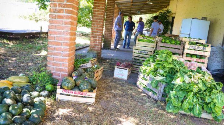Gualeguaychú apuesta a la agroecología para abastecer comedores escolares | salud