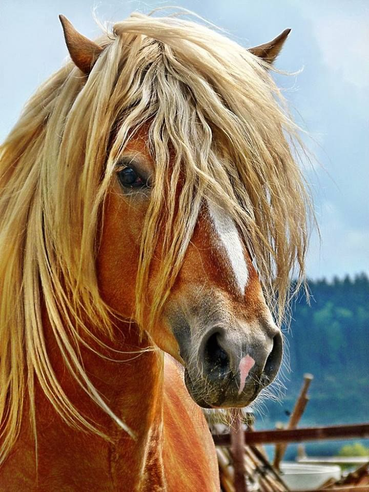 Draft Horse Breeds List 488 best images about ...
