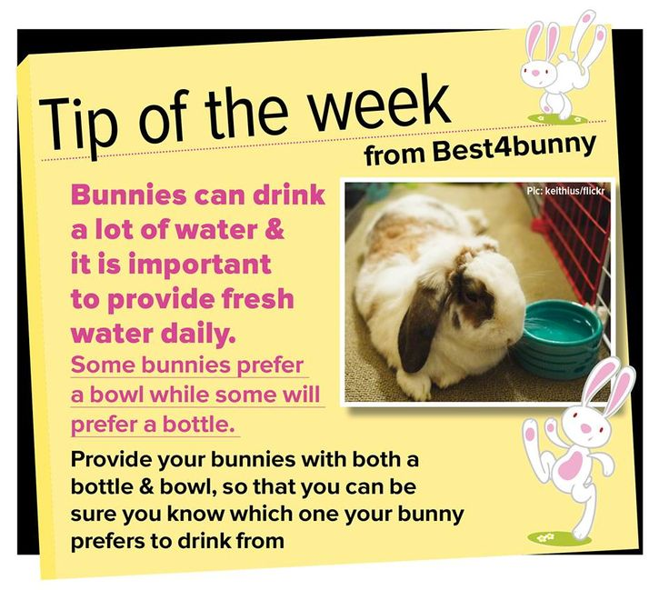 Bunny tip - week 30 Make sure you know what your bunny prefers to drink from - a bowl or a bottle