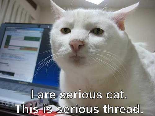 #cats #animals #feline #funny   Serious Cat