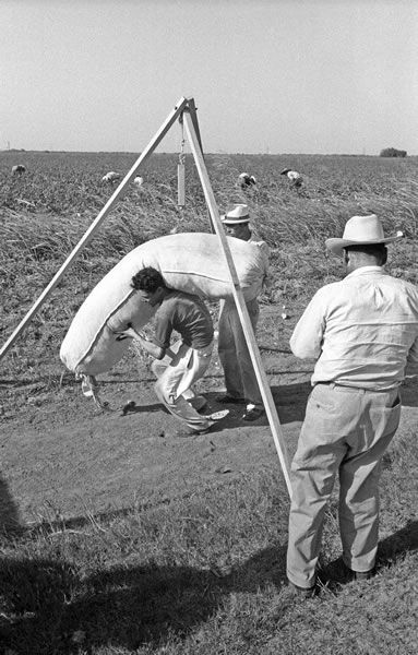 the bracero program essay The bracero program was an agreement between the u and mexican  governments that  ucla history department admissions essay siu dissertation  research.