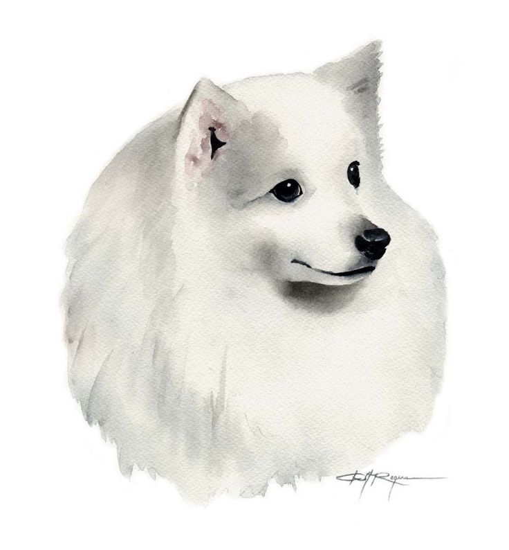japanese spitz dog watercolor painting water colours clip art of dogs running in pencil clip art of dogs and cats together