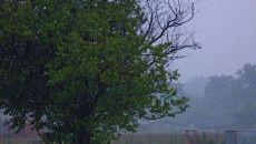 Deszczowe dni na Waszych zdjęciach (Kontakt Meteo). http://tvnmeteo.tvn24.pl/foto/deszczowe-dni-na-waszych-zdjeciach-kontakt-meteo,28,39658,1.html