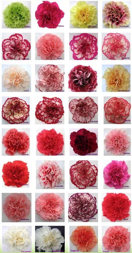 Carnation Color Guide | Flirty Fleurs The Florist Blog - Inspiration for Floral Designers