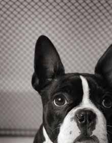 186 best dog enrichment images on pinterest dog stuff pets and daycare tips solutioingenieria Image collections