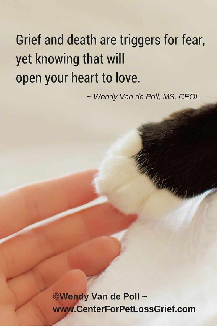 Best 25 Pet Loss Quotes Ideas On Pinterest  Pet Loss -9413