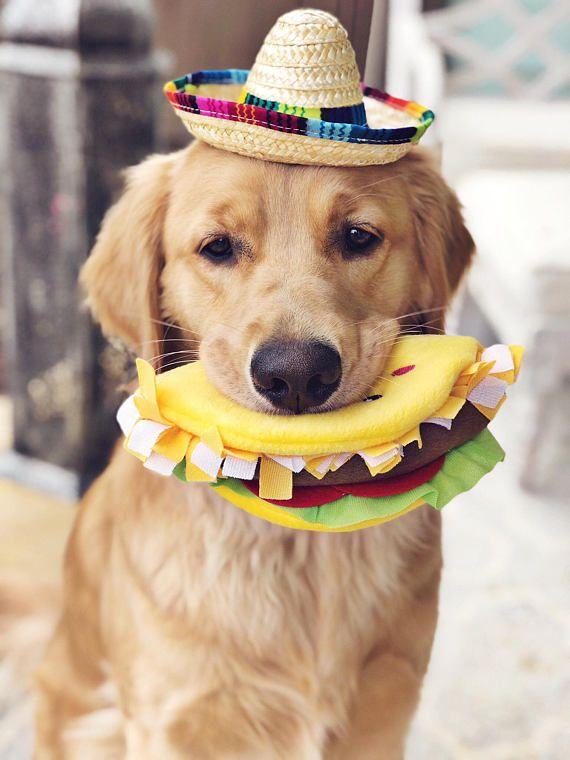 c2eb6cba Mini Sombrero || Dog Hat || Straw Hat || Mini Sombrero || Fiesta Party ||  Fiesta Hat